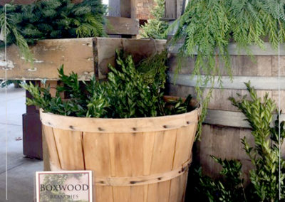 Boxwood Branches