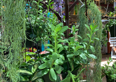 Hanging-Houseplants-1